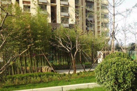 小区绿化实景图